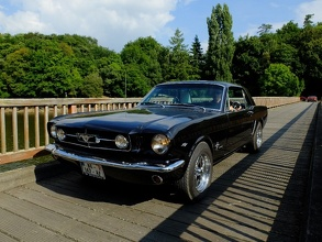 Black Mustang on the wooden Bridge